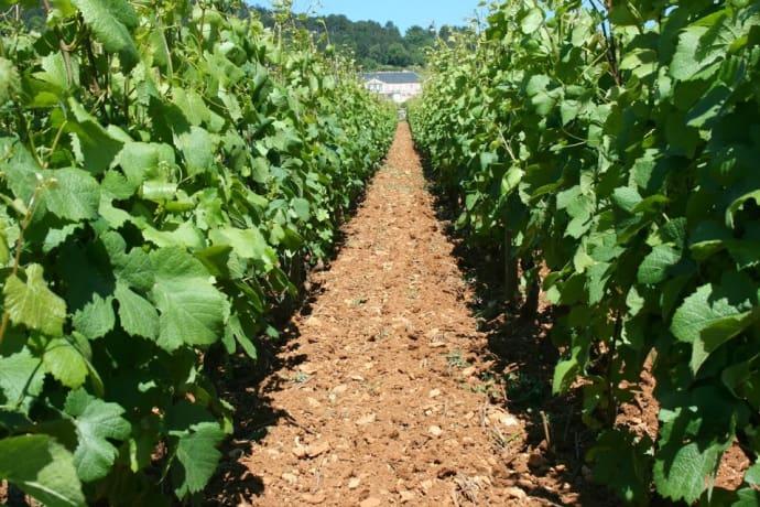 Thomas Bouleys Bourgogne Rouge